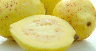 صور الجوافة في المنام لابن سيرين , تفسير رؤية الجوافة في النوم