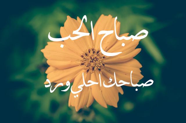 صور رمزيات صباحيه حب , صور حب في الصباح جديد