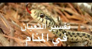 صورة تفسير رؤية الثعبان في المنام وقتله , تفسير رؤية وقتل الثعبان فى الحلم