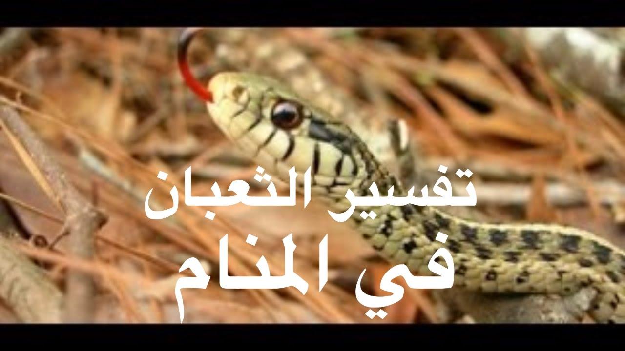 صورة تفسير رؤية الثعبان في المنام وقتله , تفسير رؤية وقتل الثعبان فى الحلم 564