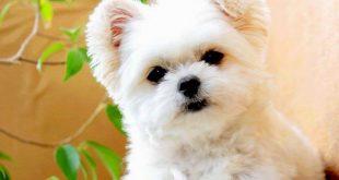 صورة صور كلاب حلوه , افضل انواع الكلاب