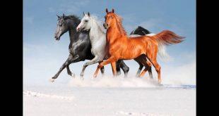 صورة بول الحصان في المنام , تفسير رؤية الخيل فى المنام