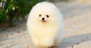 صورة اجمل الصور كلاب في العالم , صور كلاب كيوت روعة