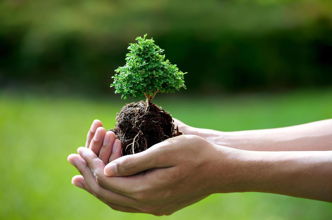 صورة صور عن البيئة , تعرف علي ملامح البيئة 10389 2