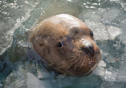 صور صور كلب البحر , افضل حيوانات السيرك