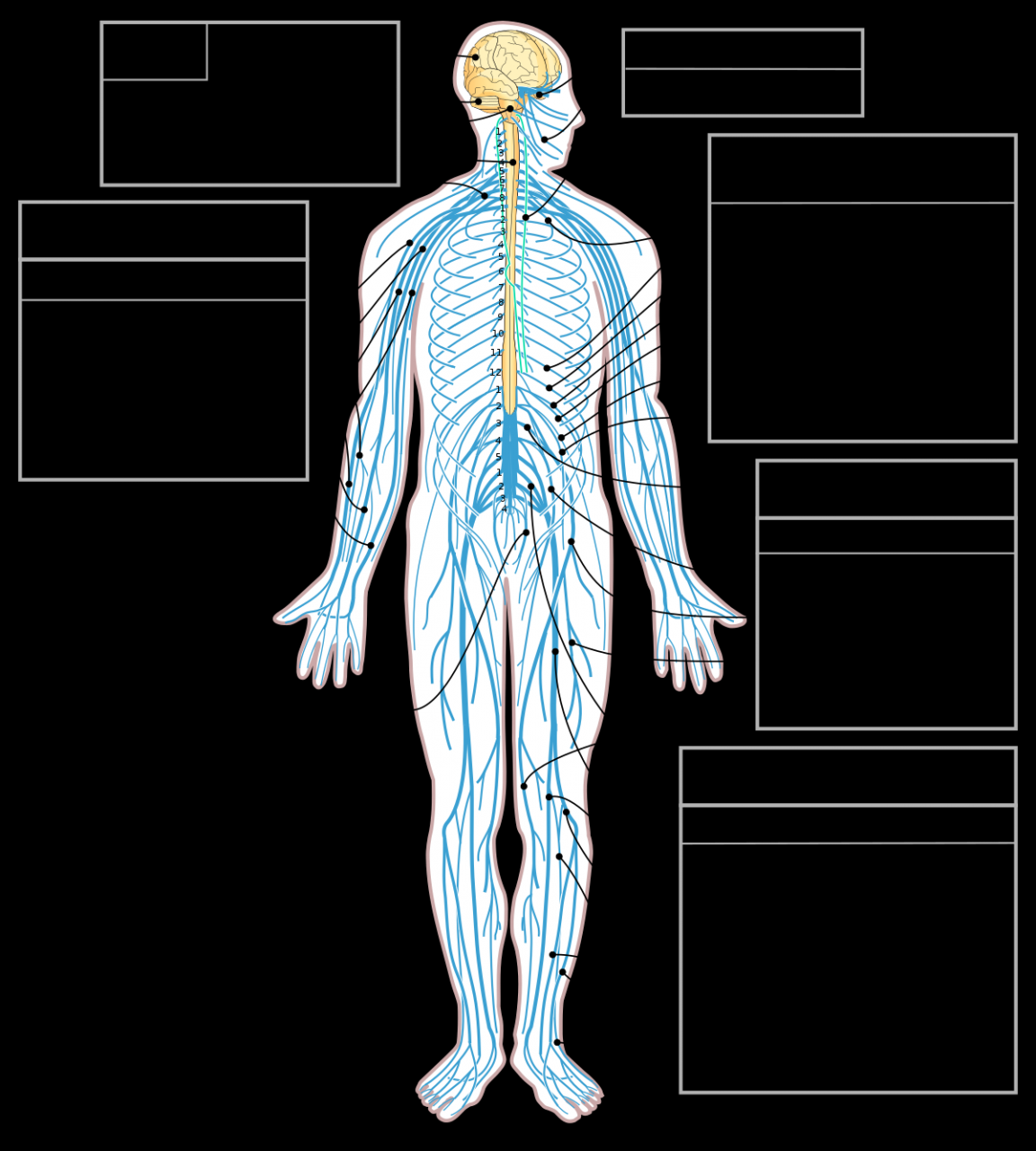 صورة صور الجهاز العصبي , العصب السمبثاوي واضرار تلفه