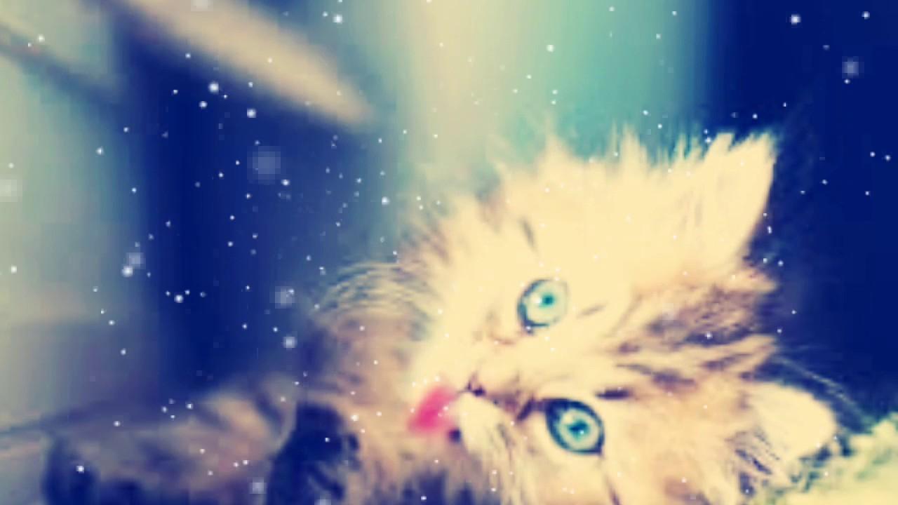 صور اجمل الصور للقطط , احلي صور للقطط الاليفه