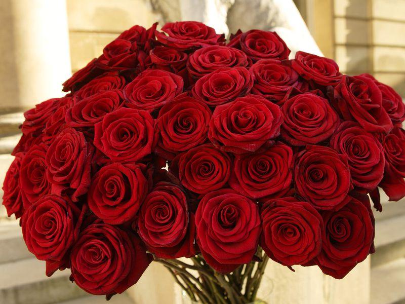 صورة صور ورود حمراء , بوكيه من الورود الحمراء كافي للتعبير عن حبك