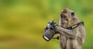 صور صور حيوانات طريفه , مواقف طريفة لحيوانات ظريفة