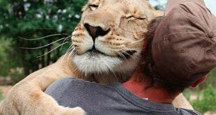 صور صور حيوانات معبرة , حيوانات حول العالم