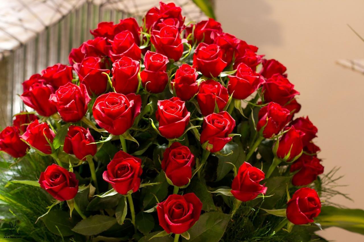 صور اجمل صور ورد بالعالم , وااو اجمل الورود في العالم شاهدها