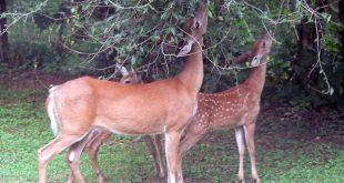 صورة حيوانات اكلات الاعشاب , ما هى حيوانات اكلات العشب