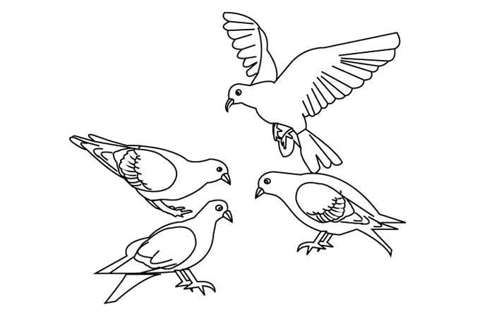 صورة صور عصافير مرسومه , عصفور جميل للتلوين