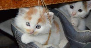 رأيت قط ميت ما تفسير ذلك , القطط الميتة في المنام لابن سيرين