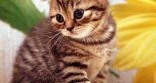 صورة رايت القطط في المنام، ماذا يحدث لو حلمت بقطه 4753 2 310x165